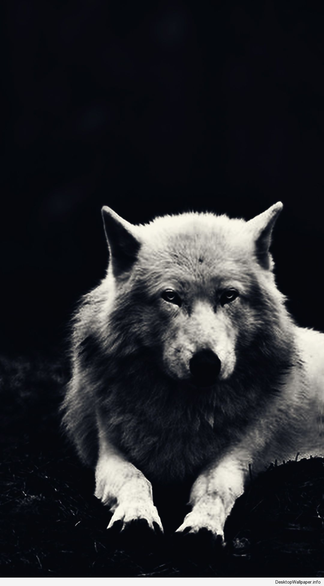60 Wolf Hd Wallpapers Desktop Background Android Iphone 1080p 4k 1080x1948 2020