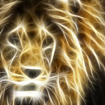 Cool Lion Wallpaper - Android, iPhone, Desktop HD Backgrounds / Wallpapers (1080p, 4k) HD Wallpapers (Desktop Background / Android / iPhone) (1080p, 4k)