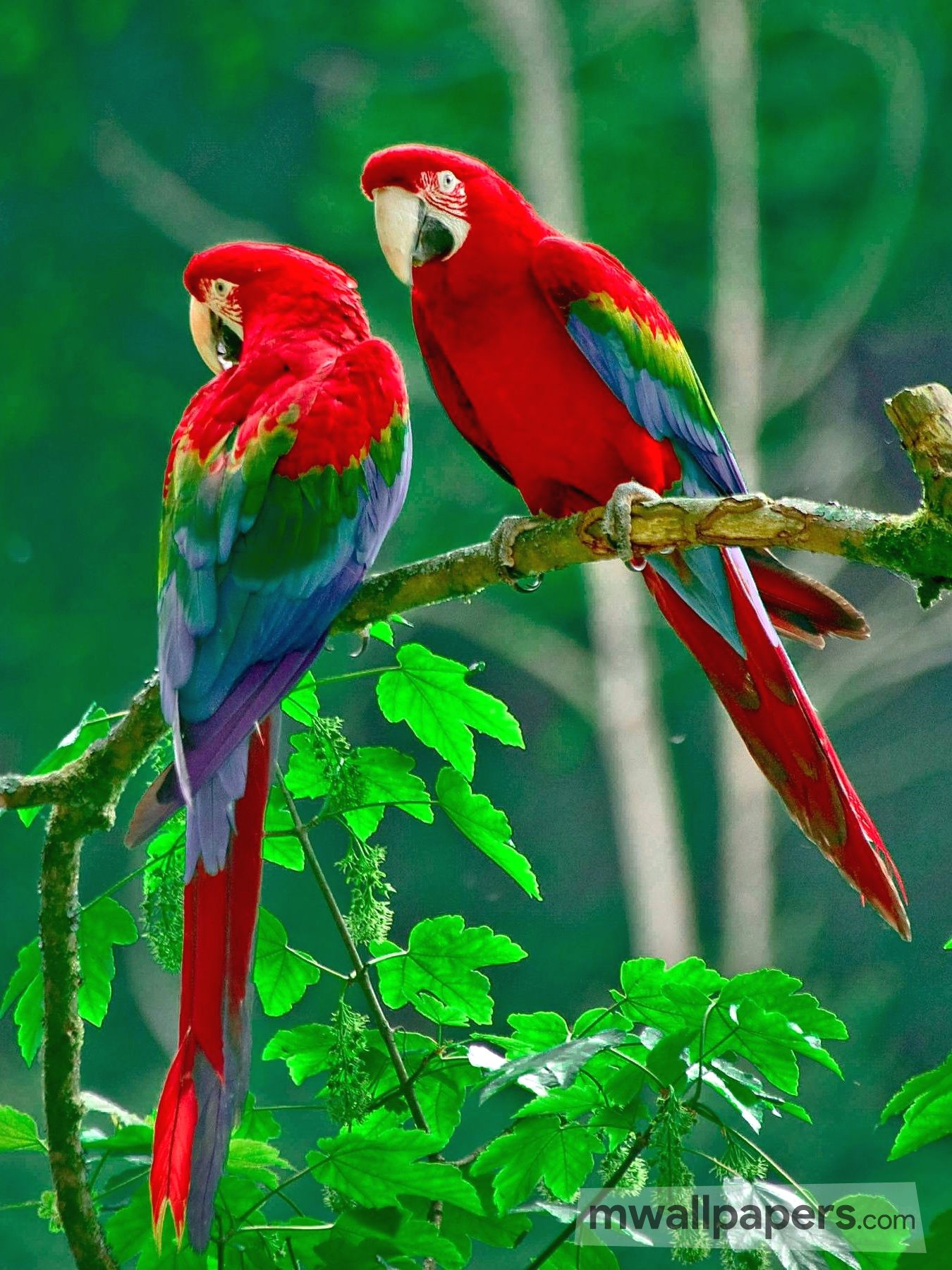 Bird Images and Wallpapers (HD) (325) - Birds
