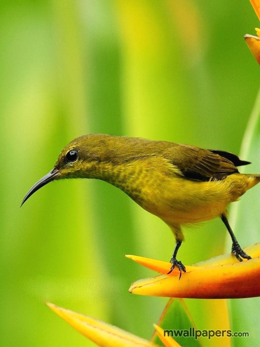 Bird Images and Wallpapers (HD) (339) - Birds