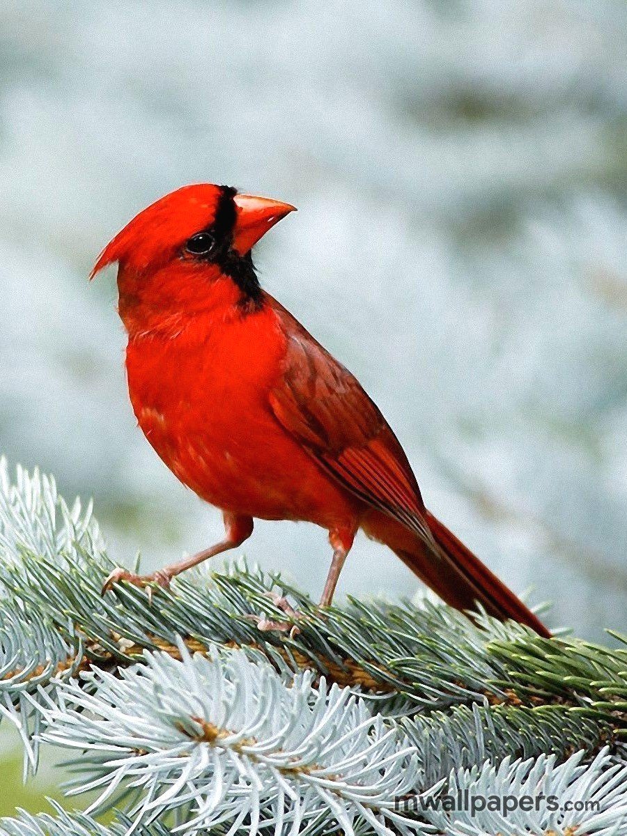 Bird Images and Wallpapers (HD) (341) - Birds