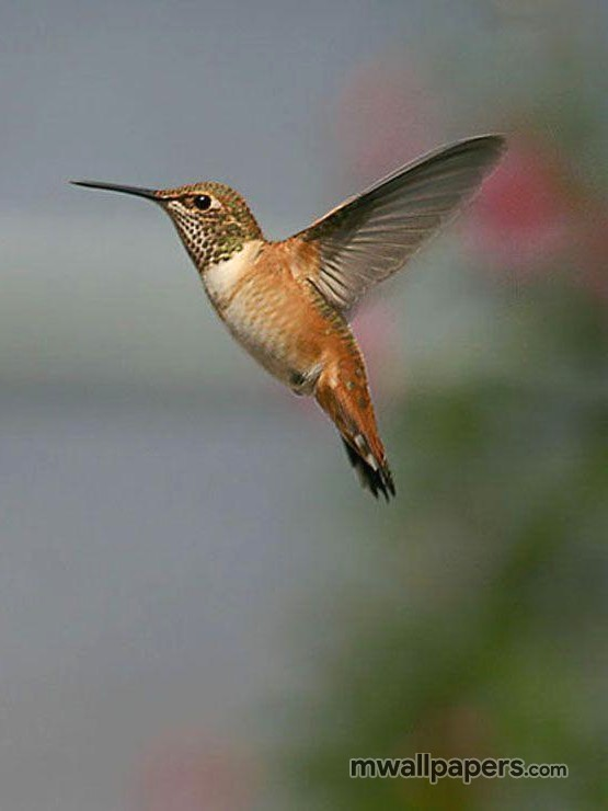 Bird Images and Wallpapers (HD) (330) - Birds