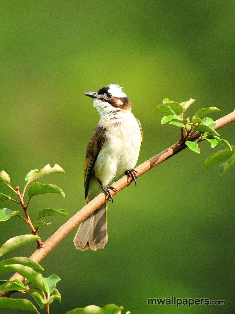 Bird Images and Wallpapers (HD) (324) - Birds