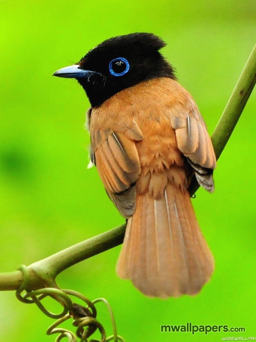 Bird Images and Wallpapers (HD) (335) - Birds