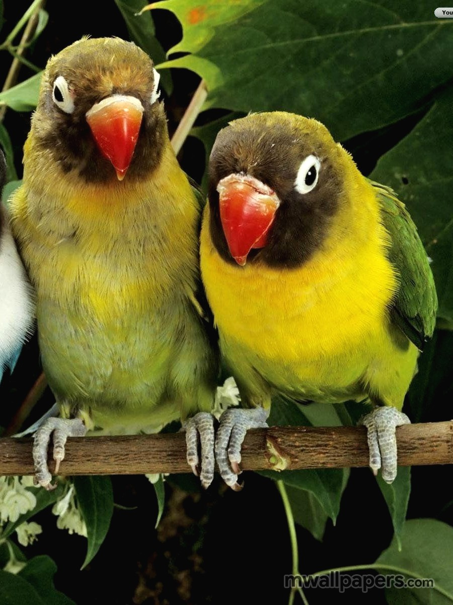 Bird Images And Wallpapers Hd Android Iphone Ipad Hd