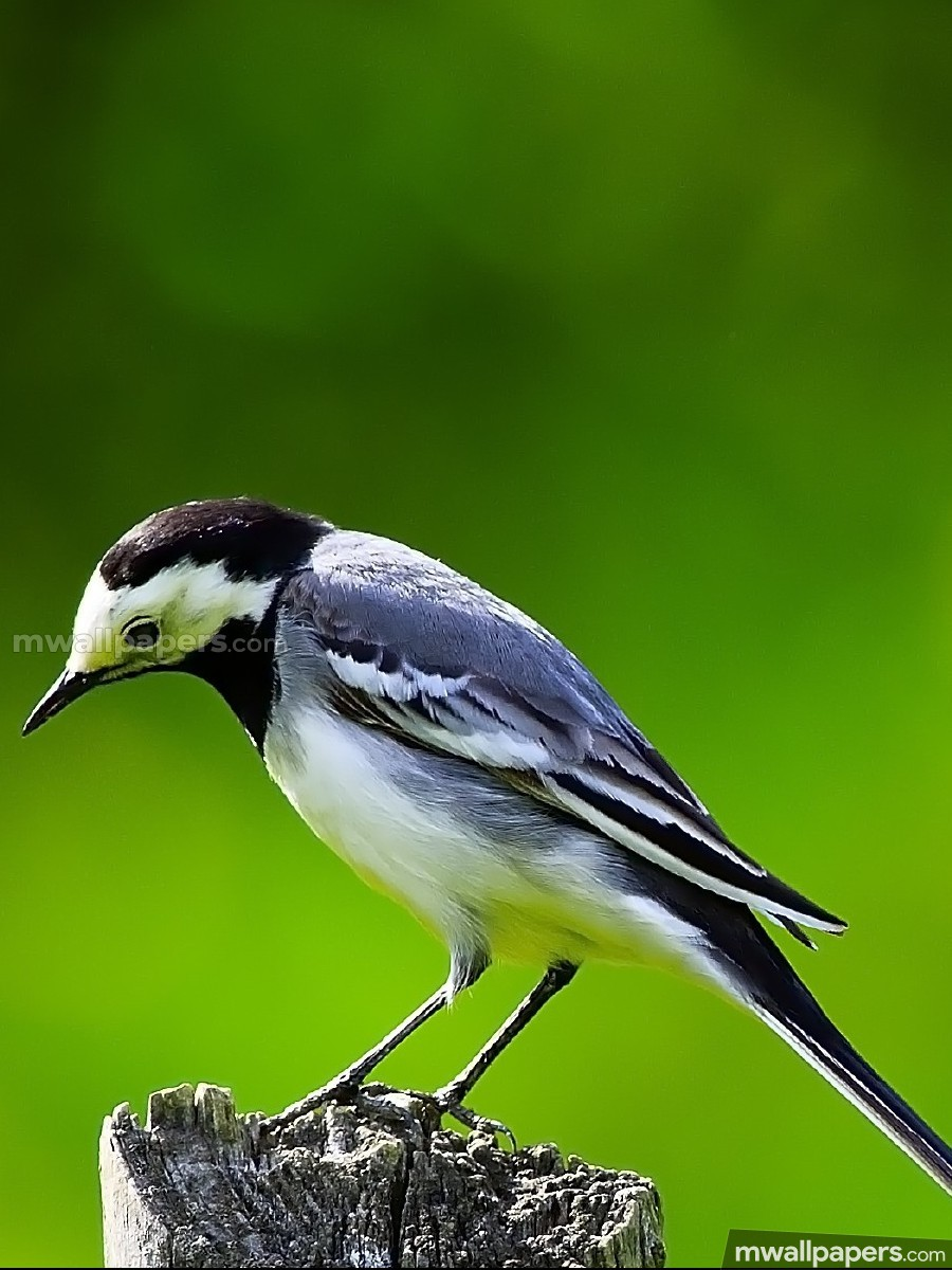 Birds Beautiful HD Photos (1080p) (12411) - Birds