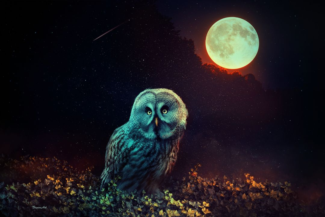 Owl The Night Guard - Android, iPhone, Desktop HD Backgrounds / Wallpapers (1080p, 4k) HD Wallpapers (Desktop Background / Android / iPhone) (1080p, 4k) (698663) - Birds