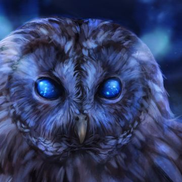 Bared Owl - Android, iPhone, Desktop HD Backgrounds / Wallpapers (1080p, 4k) HD Wallpapers (Desktop Background / Android / iPhone) (1080p, 4k)