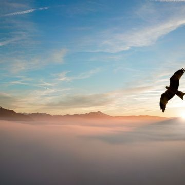 Bird Flying Over Clouds - Android / iPhone HD Wallpaper Background Download HD Wallpapers (Desktop Background / Android / iPhone) (1080p, 4k)