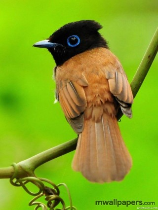 Bird Images and Wallpapers (HD)