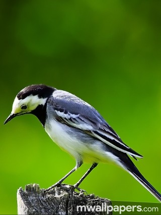Birds Beautiful HD Photos (1080p) - birds,hd images,hd wallpapers