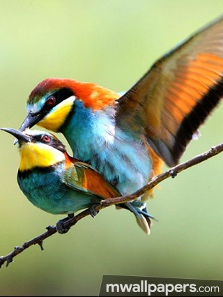 Birds Beautiful HD Photos (1080p)