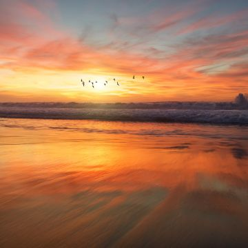 Birds Flying Over Beach - Android / iPhone HD Wallpaper Background Download HD Wallpapers (Desktop Background / Android / iPhone) (1080p, 4k)