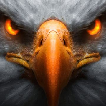Eagle Red Glowing Eyes - Android / iPhone HD Wallpaper Background Download HD Wallpapers (Desktop Background / Android / iPhone) (1080p, 4k)
