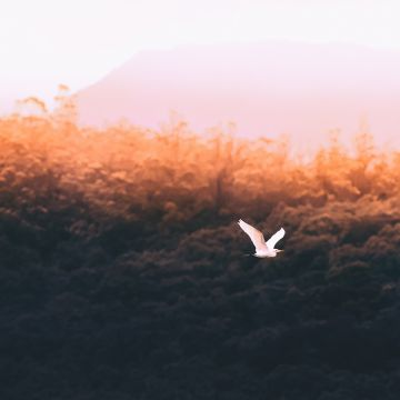 Forest Sould Bird Flying  - Android / iPhone HD Wallpaper Background Download HD Wallpapers (Desktop Background / Android / iPhone) (1080p, 4k)