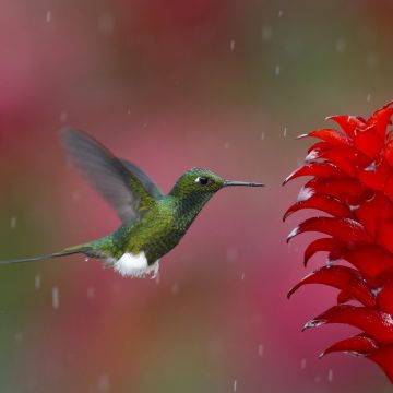 Hummingbird - Android, iPhone, Desktop HD Backgrounds / Wallpapers (1080p, 4k) HD Wallpapers (Desktop Background / Android / iPhone) (1080p, 4k)