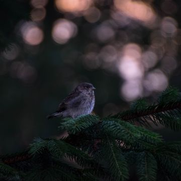 Little Bird In Forest - Android / iPhone HD Wallpaper Background Download HD Wallpapers (Desktop Background / Android / iPhone) (1080p, 4k)