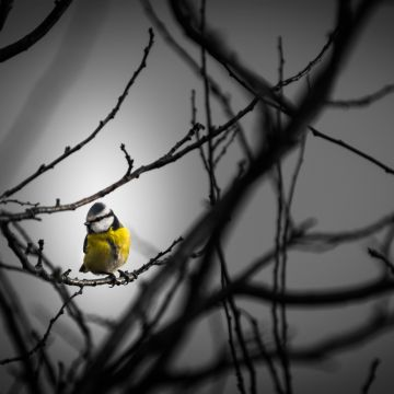 Little Yellow Bird  - Android, iPhone, Desktop HD Backgrounds / Wallpapers (1080p, 4k) HD Wallpapers (Desktop Background / Android / iPhone) (1080p, 4k)