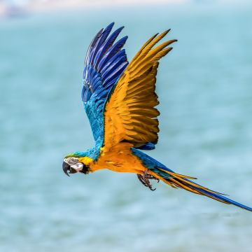 Macaw Bird  - Android, iPhone, Desktop HD Backgrounds / Wallpapers (1080p, 4k) HD Wallpapers (Desktop Background / Android / iPhone) (1080p, 4k)