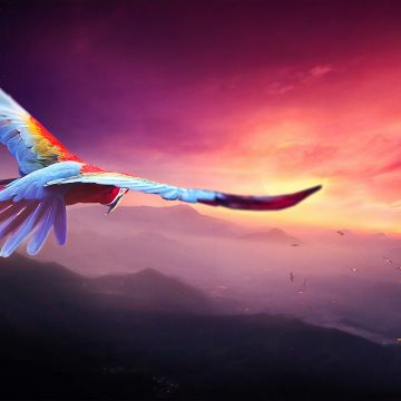 Macaw Flight Digital Art - Android / iPhone HD Wallpaper Background Download HD Wallpapers (Desktop Background / Android / iPhone) (1080p, 4k)