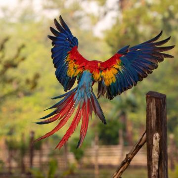 Macaw Flight Feathers - Android / iPhone HD Wallpaper Background Download HD Wallpapers (Desktop Background / Android / iPhone) (1080p, 4k)