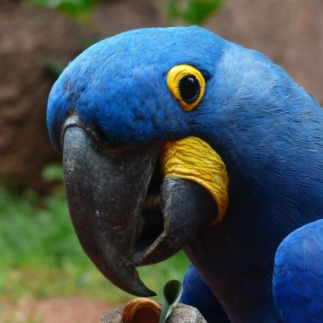 Macaw Parrot 2 - Android, iPhone, Desktop HD Backgrounds / Wallpapers (1080p, 4k) HD Wallpapers (Desktop Background / Android / iPhone) (1080p, 4k)