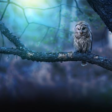 Owl Nature Forest - Android, iPhone, Desktop HD Backgrounds / Wallpapers (1080p, 4k) HD Wallpapers (Desktop Background / Android / iPhone) (1080p, 4k)