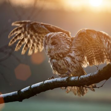 Owl Sitting On Branch - Android / iPhone HD Wallpaper Background Download HD Wallpapers (Desktop Background / Android / iPhone) (1080p, 4k)
