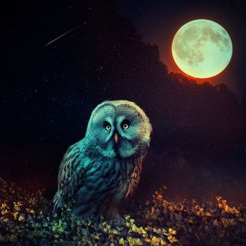 Owl The Night Guard - Android, iPhone, Desktop HD Backgrounds / Wallpapers (1080p, 4k) HD Wallpapers (Desktop Background / Android / iPhone) (1080p, 4k)