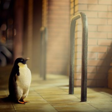Penguin Hope - Android, iPhone, Desktop HD Backgrounds / Wallpapers (1080p, 4k) HD Wallpapers (Desktop Background / Android / iPhone) (1080p, 4k)