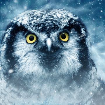 Snowy Owl Eyes Closeup - Android / iPhone HD Wallpaper Background Download HD Wallpapers (Desktop Background / Android / iPhone) (1080p, 4k)