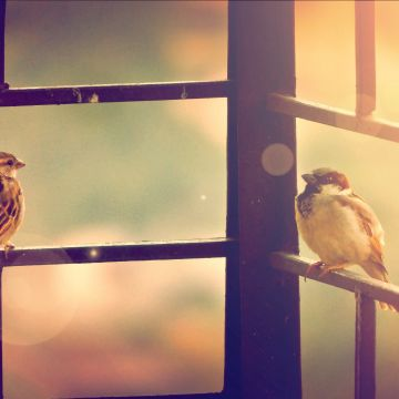 Sparrow Sitting On Railing - Android / iPhone HD Wallpaper Background Download HD Wallpapers (Desktop Background / Android / iPhone) (1080p, 4k)