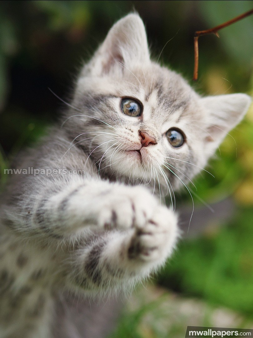 Image result for cats cute
