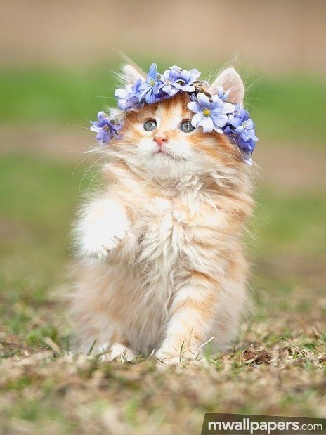 Cats Cute HD Photos (1080p) (12667) - Cats