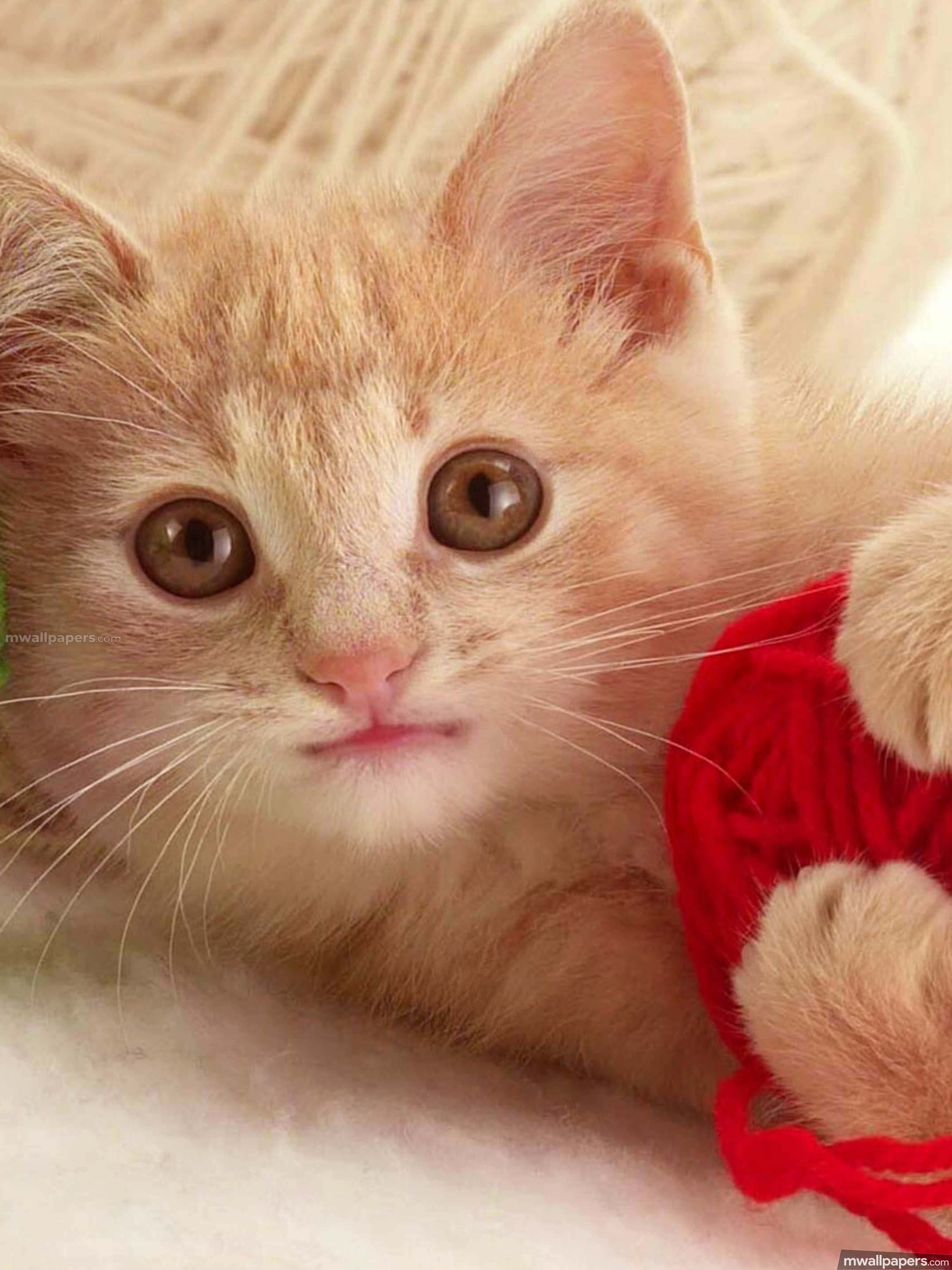 Cats Cute Hd Photos 1080p Androidiphoneipad Hd Wallpapers