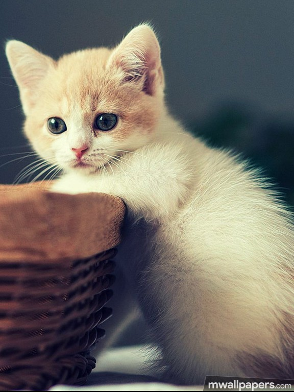 cats cute hd photos 1080p android iphone ipad hd wallpapers