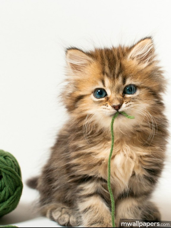 Cats Cute HD Photos (1080p) (12690) - Cats