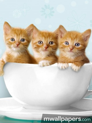 Cats Cute HD Photos (1080p) - cats,hd photos,wallpapers,hd images,petanimal,pets