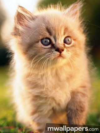 Cats Cute HD Photos (1080p)