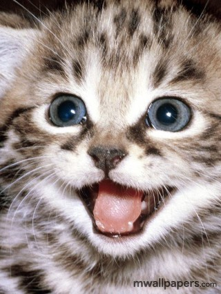Cute Kitten Wallpaper HD - cat,kitty,kitten,cats