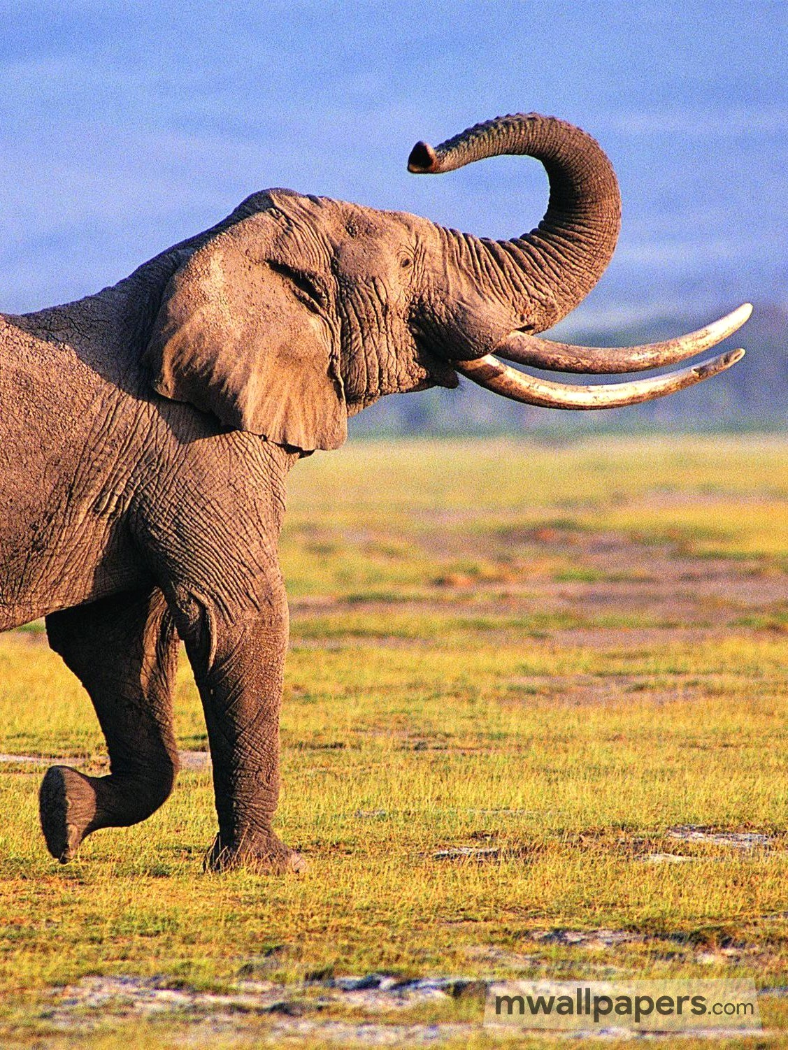 elephant iphone background elephant wallpaper hd android iphone hd wallpapers 7023