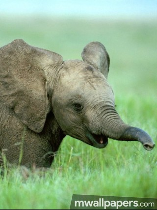 Elephants HD Photos & Wallpapers (1080p)