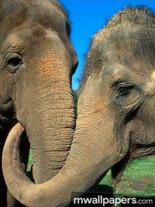Elephants HD Photos & Wallpapers (1080p) - elephants,animal,hd images,wallpapers,hd photos