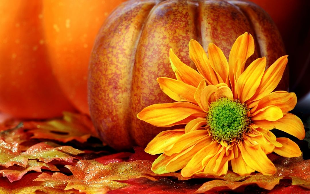 Fall flowers - Android, iPhone, Desktop HD Backgrounds / Wallpapers (1080p, 4k) HD Wallpapers (Desktop Background / Android / iPhone) (1080p, 4k)