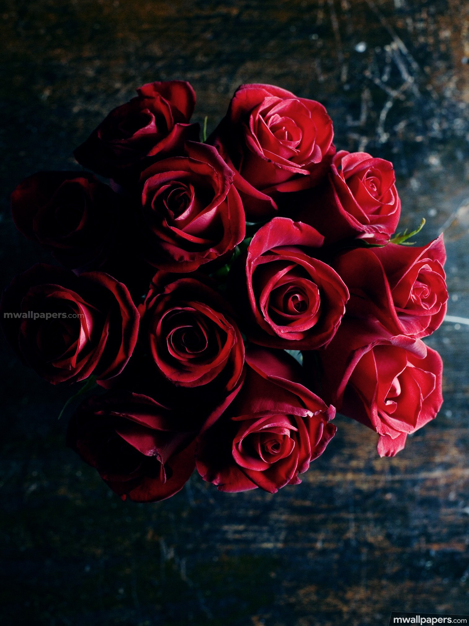 Roses Beautiful HD Photos (1080p) (16239) - Roses