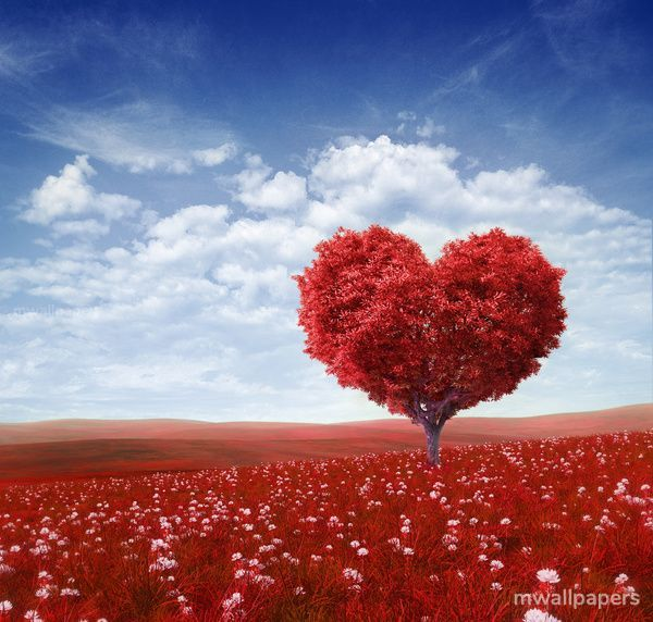 Love Images & Wallpapers (95) - love, heart, red, valentine