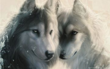 Wallpaper, Art, Wolf, Face, Space, Wolves, Love, Predator 2009019 - Android / iPhone HD Wallpaper Background Download HD Wallpapers (Desktop Background / Android / iPhone) (1080p, 4k)