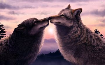 Wolves Love 876265 - Android, iPhone, Desktop HD Backgrounds / Wallpapers (1080p, 4k) HD Wallpapers (Desktop Background / Android / iPhone) (1080p, 4k)