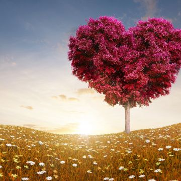 Heart Shape Tree Wallpaper 2560x1440 for Tablets - Android / iPhone HD Wallpaper Background Download HD Wallpapers (Desktop Background / Android / iPhone) (1080p, 4k)