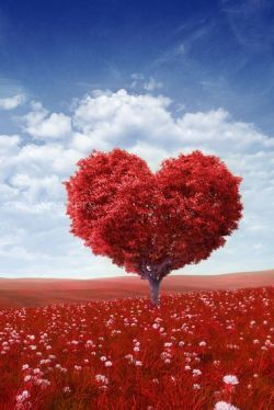 Love Images & Wallpapers - love,heart,red,valentine